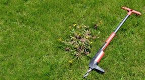 Sarclez le retrait à la main - l'outil et les mauvaises herbes 1 d'entretien de pelouse images libres de droits