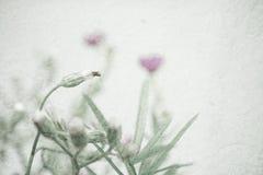 Sarclez les fleurs dans le style de couleur de vintage sur la texture de papier de mûre Images libres de droits