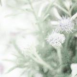 Sarclez les fleurs dans le style de couleur de vintage sur la texture de papier de mûre Images stock
