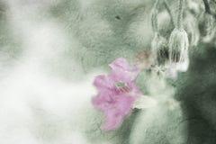 Sarclez les fleurs dans le style de couleur de vintage sur la texture de papier de mûre Photographie stock