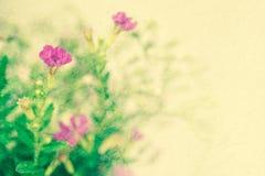 Sarclez les fleurs dans le style de couleur de vintage sur la texture de papier de mûre Photos libres de droits