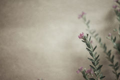 Sarclez les fleurs dans le style de couleur de vintage sur la texture de papier de mûre Photographie stock libre de droits