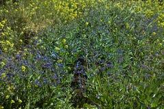 Sarclez les usines, mauvaise herbe de champ sur le champ entre, les fleurs sauvages image libre de droits