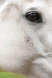 Sarcoid - hudtumör Royaltyfria Bilder