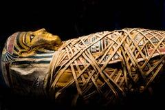 sarcophagous Islolated的妈咪 免版税库存照片