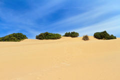 Sardegna - Dune in Piscinas Stock Image