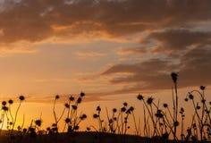 Sardegna Sunset. Sunset in the countryside of Sardinia stock photo