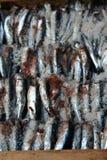 sardele stwarzać ognisko domowe robią solony Obrazy Royalty Free