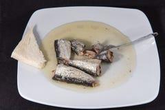 sardina imagen de archivo