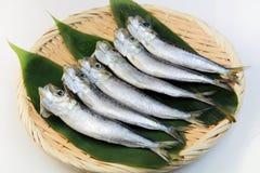 sardina Fotografie Stock