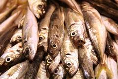 Sardinas auf Nahrungsmittelmarkt-Perspektiveansicht Lizenzfreie Stockfotos