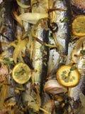 Sardinas, cebolla y ajo Foto de archivo libre de regalías