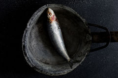 Sardinas en fondo oscuro Fotos de archivo libres de regalías