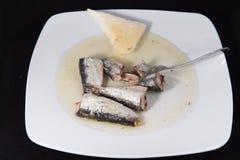 sardine Royalty-vrije Stock Afbeeldingen