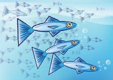 Sardine illustrazione di stock