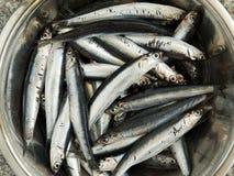 sardine Royaltyfri Fotografi