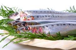Sardine Stock Photos