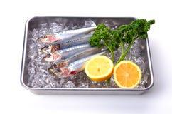 Sardine Stock Image