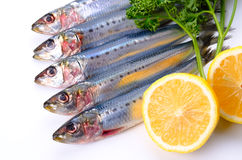 Sardine Royalty Free Stock Images