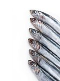 Sardine Royalty Free Stock Photography