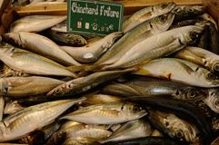 sardine Fotografia Stock