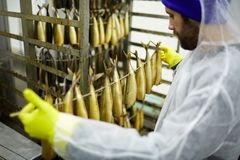 Sardine affumicate Immagine Stock Libera da Diritti