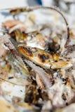 Sardine alimentari arrostite sulla fine del piatto su sulle ossa, sulla testa e sull'occhio immagini stock