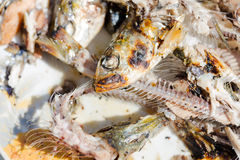 Sardine alimentari arrostite sulla fine del piatto su sulle ossa, sulla testa e sull'occhio fotografia stock