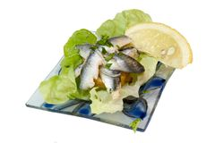 Sardine aperitif. On a white background Stock Photography