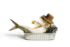 Free Sardine Chilling Out Royalty Free Stock Image - 69689036