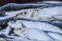 Sardine stock images
