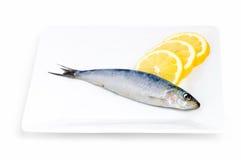 Sardine en citroen stock fotografie