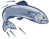 Sardine fish Royalty Free Stock Photography