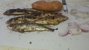 Sardine fish CHOUWAYA. Sardine fish moroccan chouwaya stock image