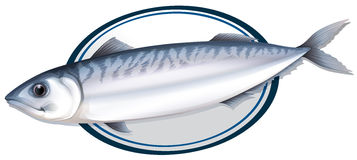 Sardine fish on a plate Stock Photo
