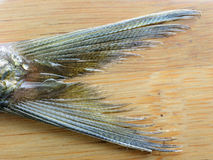 Sardine fish tail Royalty Free Stock Images