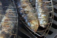 Sardine fresche pronte sulla griglia Immagini Stock