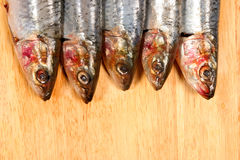 Sardine heads Stock Photography