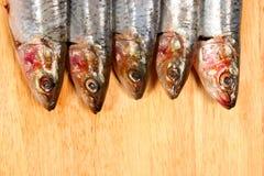 Sardine heads. Five Sardine heads on a wooden board Stock Photography