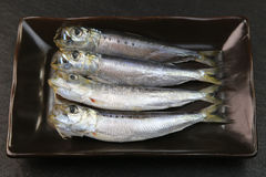 Sardine. I served sardine produced in Japan to a colander Stock Photography