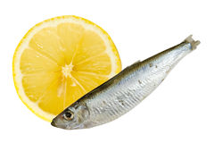 Sardine with lemon composition. Sardine with lemon with clipping path royalty free stock photography