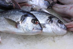 The sardine on market Stock Photo