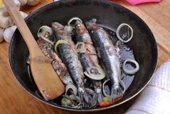 Sardine in a pan ready to eat Royalty Free Stock Images