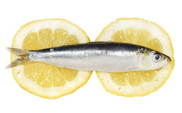 Sardine Royalty Free Stock Photo