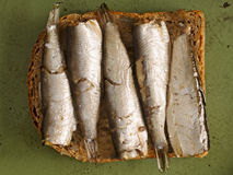 Sardine sandwich Stock Photos
