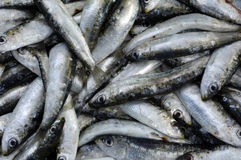 Sardine on a stall Stock Photography