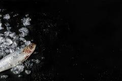 Sardine su fondo scuro Immagine Stock