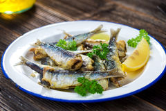 sardinen stockbild