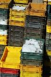 Sardinen in den Kästen lizenzfreie stockfotos