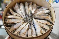 Sardinen in einem runden Kasten Lizenzfreie Stockfotos